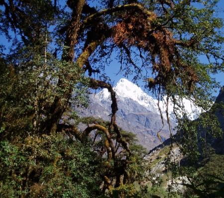 Trek dans le Langtang   Jour 3 : Bamboo   Langtang langtang 2 450x398