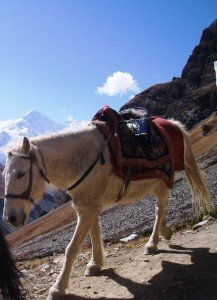 Tour des Annapurnas : Laddar   Thorung Phedi   High Camp anes thorung phedi high camp nepal2 217x300