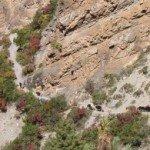 Photos de trek au Népal caravane de yaks tour des annapurnas nepal e1423682140620 150x150