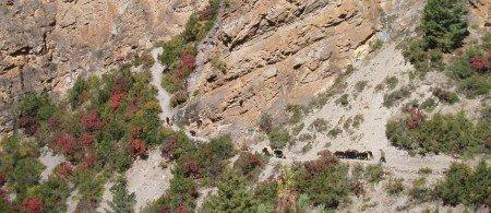 Tour des Annapurnas : Upper Pisang   Ngawal   Braga caravane de yaks tour des annapurnas nepal e1423682140620